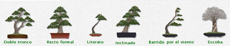 guia de iniaciacion al bonsai