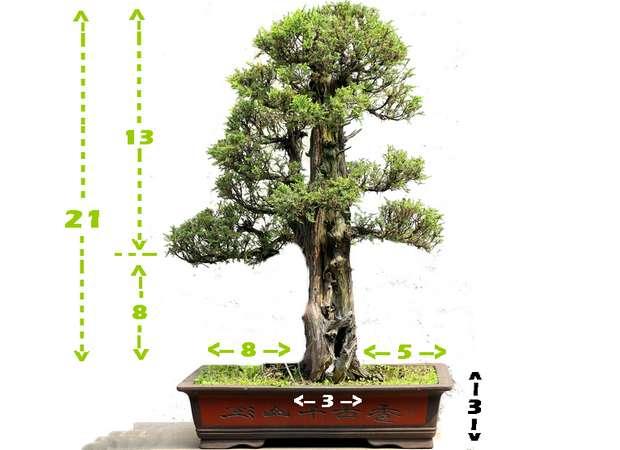 Directrices básicas del bonsái